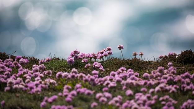 fleurs montagnes chartreuse