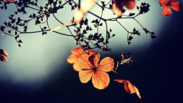Fleur orange | La Fraternité Chrétienne