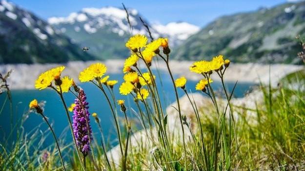 Fleurs chartreuse