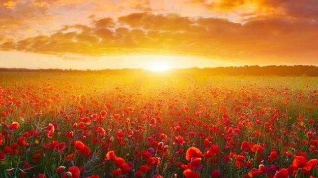 Fleurs tulipes coucher soleil