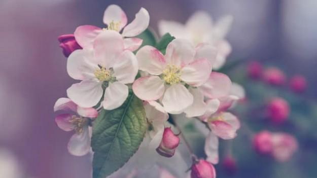 fleurs faire des disciples