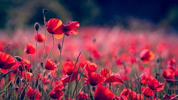 L'obéissance - fleurs