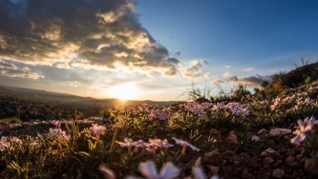 Montagnes fleurs chartreuse