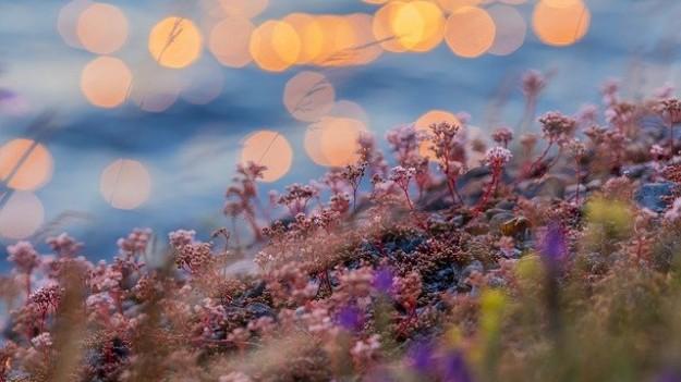 Jonas eau fleurs