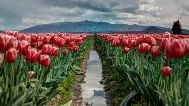 Fleurs chemin